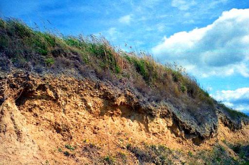 die dünne Graskrumme lagerte auf einem sandigen Untergrund
