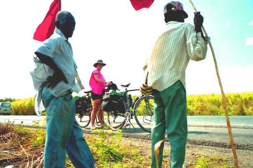 entlang der Strasse jetzt endlose Zuckerrohr-Felder