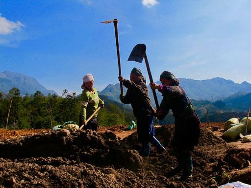 junge Frauen verrichten die schwere Feldarbeit