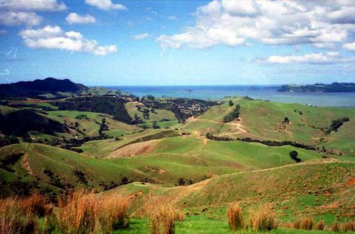 eine unendlich grosse Schafsfarm mit Blick über die Coromandel Bay