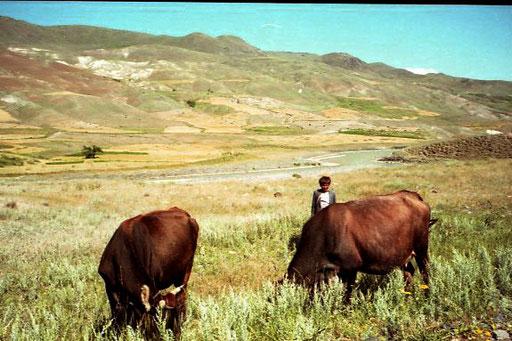 noch fanden die Kühe genug zu fressen, ein Monat später war alles braun
