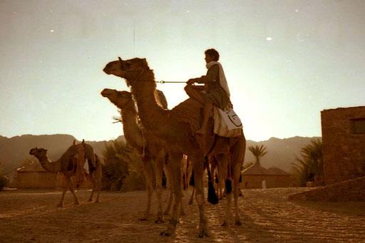 eine exemplarisches Photo - Kamel und Reiter in der Abendsonne