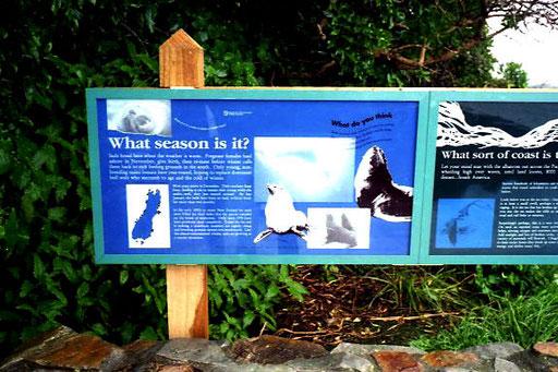 Wal-Watching, eine beliebte Touristen-Attraktion, für ich eher nicht