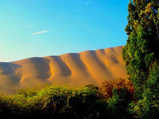 am frühen Morgen präsentiert sich die Wüste am schönsten