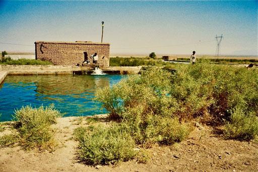 inmitten einer Wüste eine saubere, ultrakalte Quelle