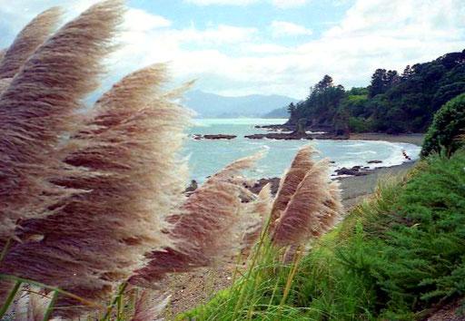 Blick auf eine der vielen Coromandl-Buchten