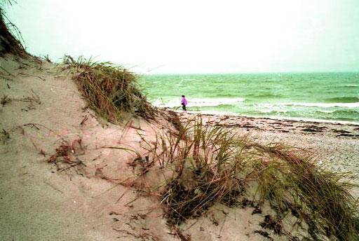 hinter der Dünung die stark rauschend Brandung der Ostsee