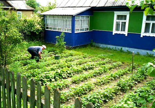 jedes Haus hat einen reichhaltigen Gemüsegarten