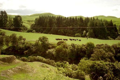 die Distanz bis zur Hauptstadt Wellington 470 km