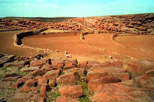 ein neu angelegtes Terrassenfeld in den jemetischen Bergen