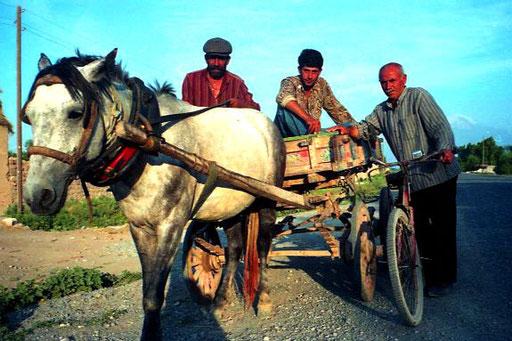 die sparsamsten Verkehrsmittel - Pferd und Fahrrad