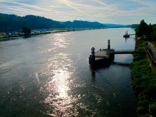 fast idyllisch die Donau im milden Morgenlicht