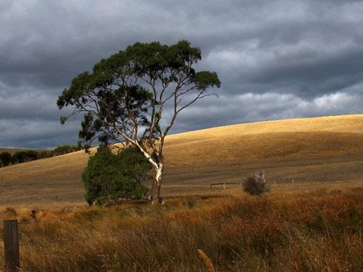 die weite braune Landschaft - ganz anders als in Neuseeland