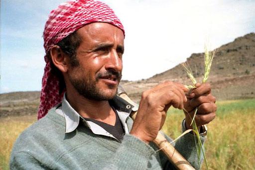 ein jemenitischer Bauer bei der Feldarbeit