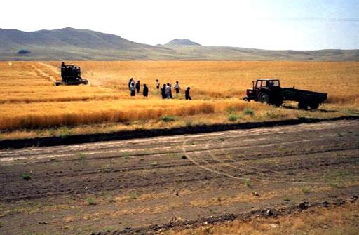 riesige Weizenfelder nahe dem Van-See