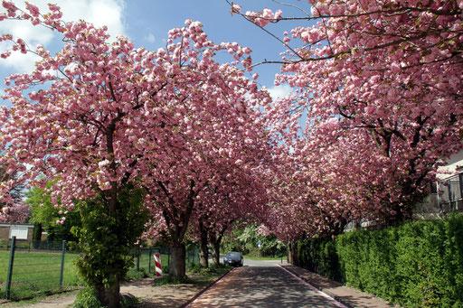 Frühling naht