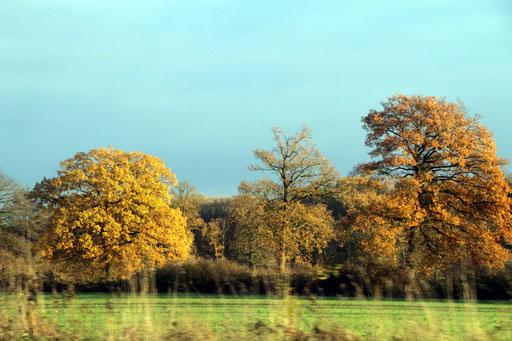 Herbst während der Fahrt