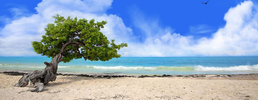 Aruba: Eagle beach