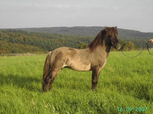 IS2003101061 - Dugur frá Petursbergi -
