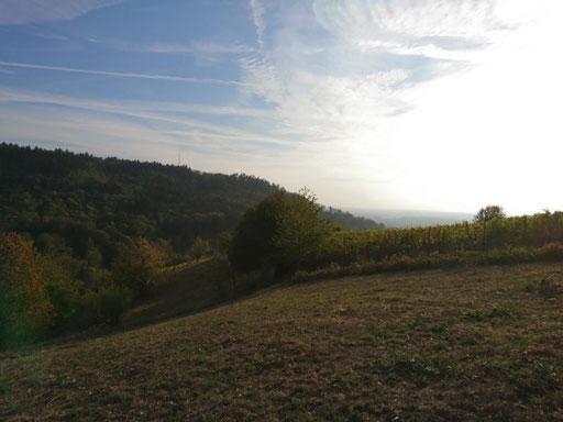 """Grundstück """"Auf der Staig"""", Foto: A. Herschel"""