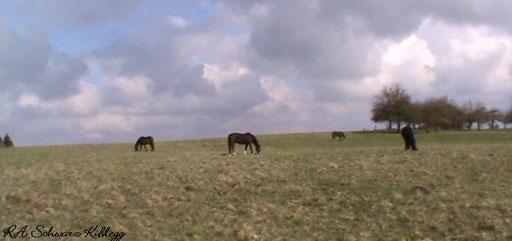 Johlerhof 25.03.2014 frame aus Video