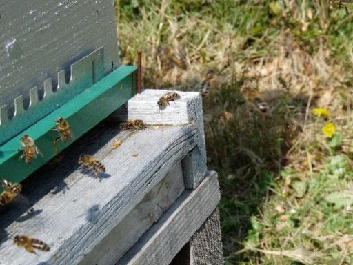 plancher de ruche d'envol