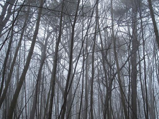 Wald auf Hiddensee