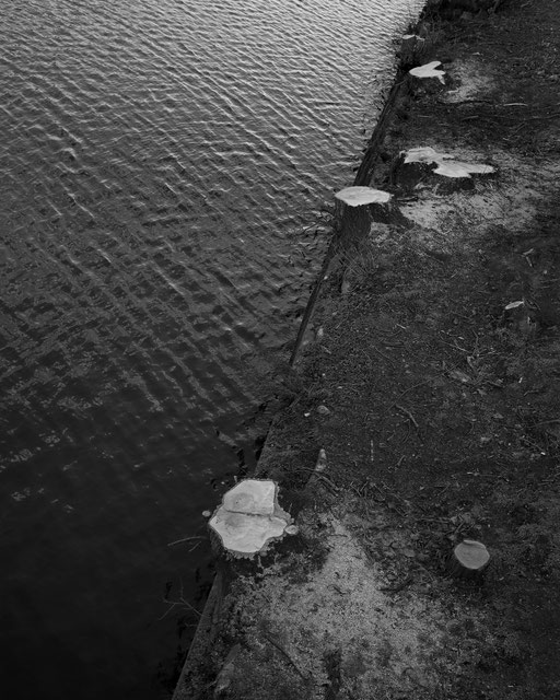Schnitt - Bille © Andreas Muenchbach