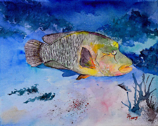 Napoleon-Lippfisch (Cheilinus undulatus) im Roten Meer, Gotha Abu Ramada, 2015