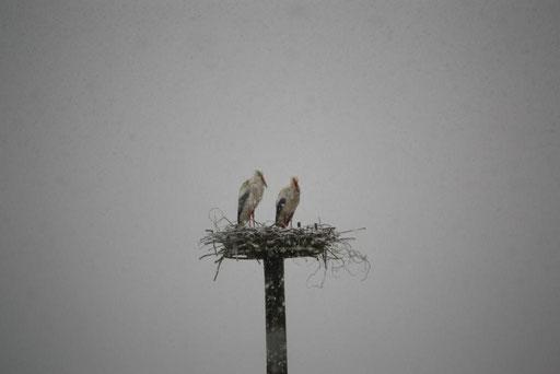 """""""Libi"""" und """"Coco"""" fühlen sich bei Schneefall sichtlich unwohl - Foto: Miriam Wagner"""