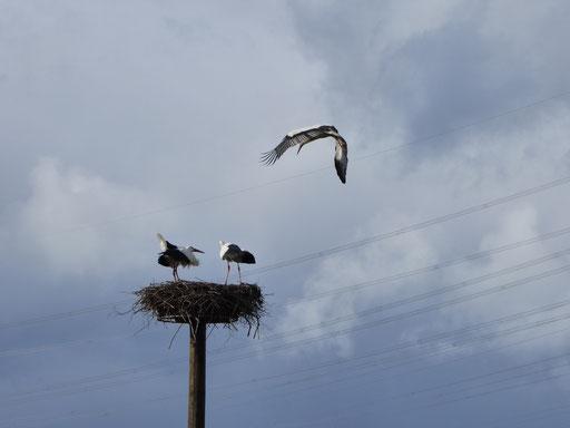 10. März: Attacke auf das Nest! - Foto: Miriam Wagner