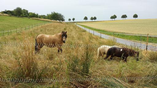 Gute Stimmung bei schlechtem Wetter - mit genug Gras geht alles!