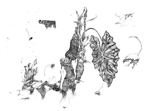 anatomie végétale