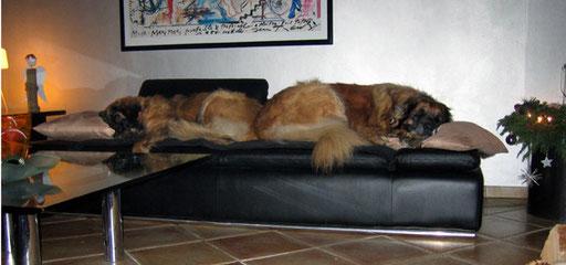 Ein Hundeleben!  Samba mit ihrer Freundin Pepper am dritten Advent 2012