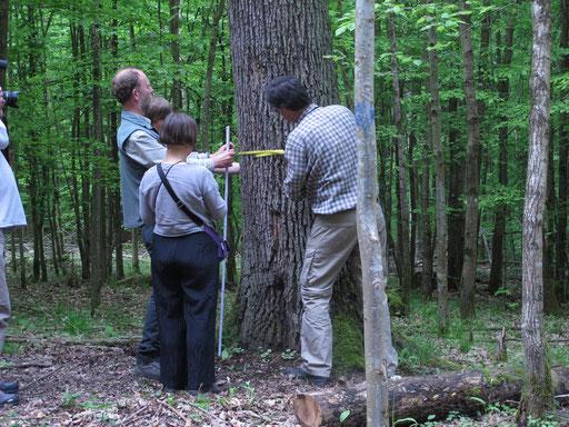 Fortbildung // Jahrestagung. Speierling (Sorbus Domestica), Eppingen 2013