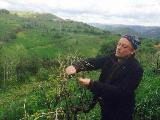 Die Wachau schickt ihren besten Mann. Der Autor als Gastarbeiter in einem Weingarten in Kurdistan. Foto: M. Akbal