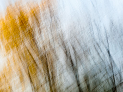 Herbstwald am Tüllinger