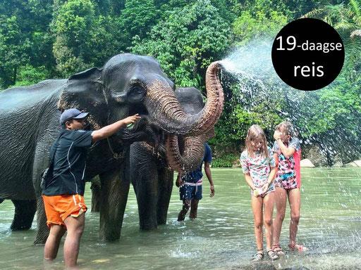Plezier met olifanten bij Tangkahan Sumatra