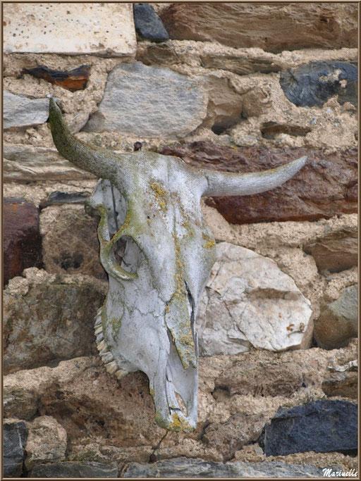 Crâne de vache sur un mur au village d'Aas, Vallée d'Ossau (64)