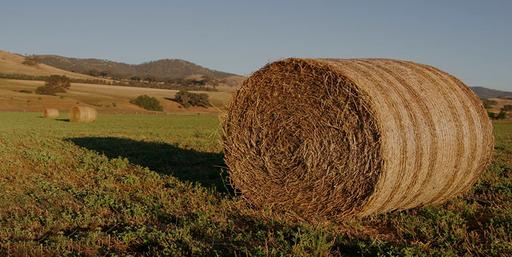 Creepypasta: Lo que acecha en los campos