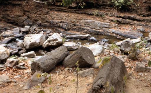 Besuch des Nationalparks Puyango mit EUCADORline