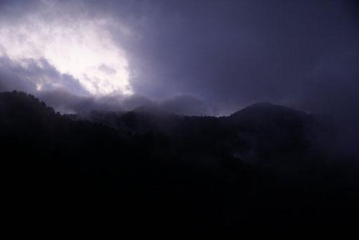 時にはこんな幻想的な景色も広がる夜の森