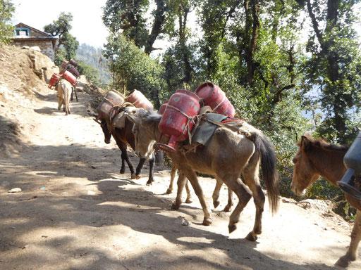 Nepal trekking wandelen