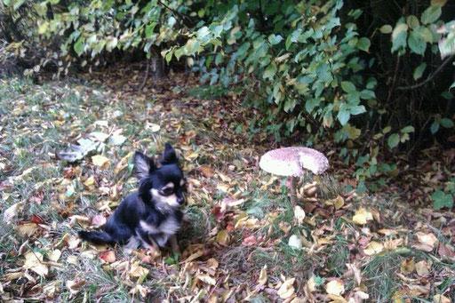 Zoey von Zoey & Zazou Hundepralinenconfiserie