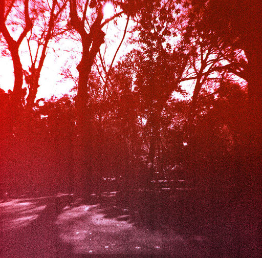 Trees 1 & purple film