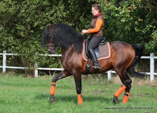 Vermittlung Spanischer Pferde Spanische Pferde Deutschls Webseite