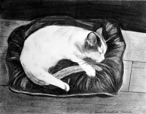 cat traditional art pencil illustration