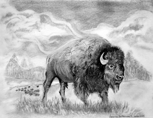 buffalo traditional drawing art pencil