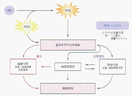 活性酸素の二面性(毒性と生理活性)
