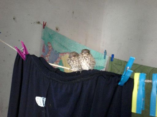i due piccoli alati appollaiati sulla mia biancheria stesa ad asciugare